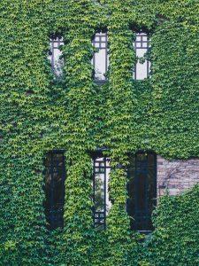 Ivy leauge USA